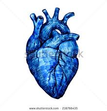 human heart viewed front hand drawn stock illustration 604941941