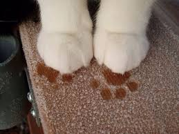 Welcome Mat Wipe Your Paws 33 Best Wipe Your Paws Doormat Images On Pinterest Door Mat Dog