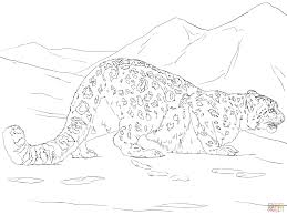 snow leopard hunting coloring page free printable coloring pages