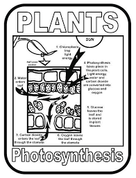 New Download Photosynthesis In Plants Poster Download Club Photosynthesis Coloring Page