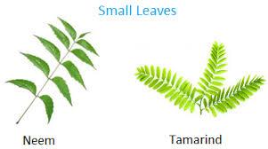 plants around us big u0026 small plants shrubs u0026 herbs water plants