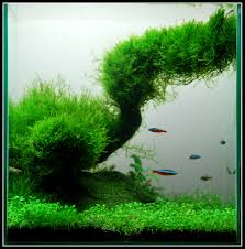 nano aquascape the world s most recently posted photos of aquascape and nano