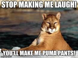 Puma Meme - punny puma meme generator imgflip