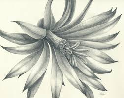 pencil sketches flower drawing of sketch