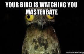 Potoo Bird Meme - your bird is watching you masterbate weird stuff i do potoo make