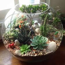 mahmut kırnık 852 terrarium pinterest terraria plants and