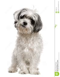 Dog Grooming Styles Haircuts Dog Grooming Styles Haircuts Find Hairstyle