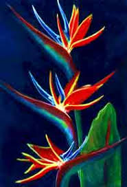 birds of paradise flower hawaii bird of paradise flowers paintings prints for sale by
