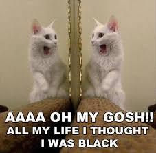 White Cat Meme - funny white cat meme funny pics story