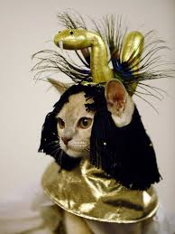 Cat Halloween Costumes Cats 10 Cats Costume Images Cats Costumes