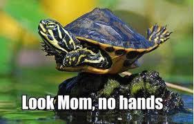 Turtle Memes - turtle crow raven memes garden pond forums
