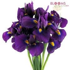 Lisianthus Flower Purple 25in 20 Best Rachel U0027s Flowers Images On Pinterest Purple Flowers