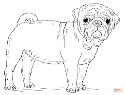 cute pug dog coloring free printable coloring pages