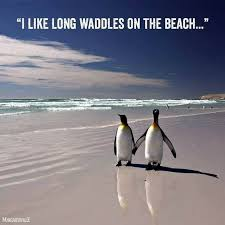 Funny Penguin Memes - these hilarious penguin memes will have you laughing all day