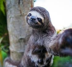 Sloth Meme Generator - sloth selfie blank template imgflip