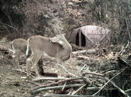 Bow Hunting From Ground Blind Ground Blind Bowhunting Getting Face To Face With Whitetails