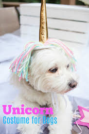 unicorn costume for dogs u2013 craft box girls