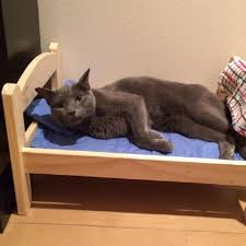 donate ikea furniture ikea donates doll beds to shelter so cats won t have to sleep on