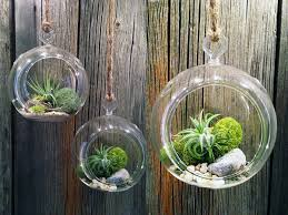 diy hanging airplant terrarium mini garden garden ideas design
