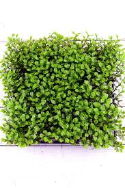 artificial boxwood wreath artificial boxwood wreath hixathens