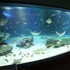 japanese aquarium sunshine aquarium live japan japanese travel sightseeing and
