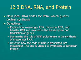 chapter  molecular genetics  dna the genetic material   with  dna rna and protein  main idea dna codes for rna from slideplayercom