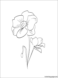poppies colouring page coloring pages