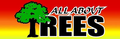 all about trees home