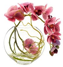 faux orchids faux fuchsia orchid with vine in glass vase reviews joss