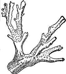 drawn coral sea plant pencil and in color drawn coral sea plant
