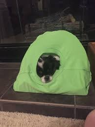 Dog Igloos Diy Cat Tent 9 Steps With Pictures