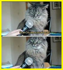 Image Flip Meme Generator - stunning meme template flip pic for cute cat generator style and