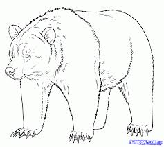 grizzly bear outline