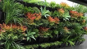indoor vertical garden plants zandalus net