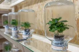 Interior Garden Plants by Indoor Plants Inhabitat Green Design Innovation Architecture Also