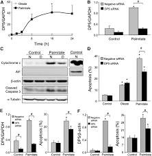 death protein 5 and p53 upregulated modulator of apoptosis mediate