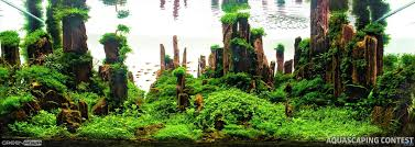 hungarian aquascaping contest hac 2016 green aqua