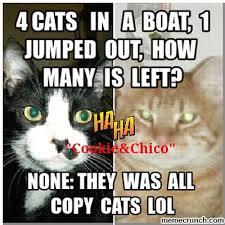 Stupid Cat Meme - cat jokes scratchz padz