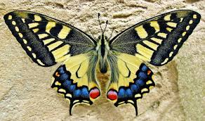 butterfly life cycle lesson for kids