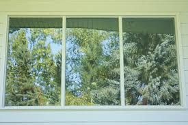 window strikes archives birds calgary