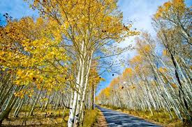 Wedding Planners In Utah Park City Wedding Planner Incredible Scenery For Your Engagement