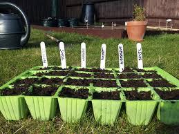 vegetable garden for beginners cheap affordable vegetable garden