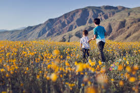 Anza Borrego Wildflowers Super Bloom by Socal Wildflower Super Bloom All Colors Photography Blog
