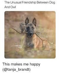 Funny Owl Meme - 25 best memes about owl owl memes