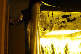most efficient grow light what s the cost of electricity to grow marijuana grow weed easy