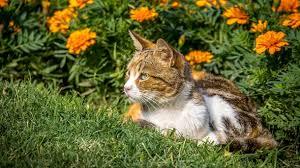 gerüche die katzen nicht mö was tun gegen katzenkot im garten katzen artgerecht vertreiben