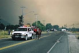 Bc Wildfire Prevention by Horse Council Bc Activates Fund To Help With Animals Displaced By