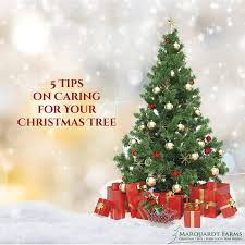 Krinner Christmas Tree Genie Xxl by How To Shop For A Good Christmas Tree Stand Marquardt Farms