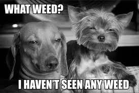 Funny Memes About Weed - animal memes what weed funny memes