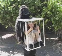 Gorilla Halloween Costumes 10 Halloween Costumes Wallet Scream Terror